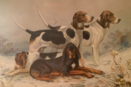 19th century foxhounds