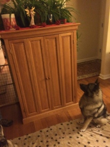 Keeping all decorations way above the elkhound's sightline keeps all elkhounds safe for the holidays.