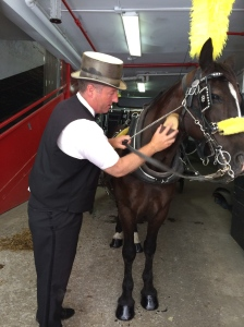 Grooming Tyson before he heads out for a carriage ride