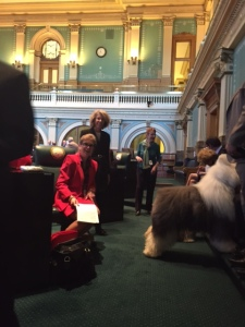 "Old English Sheepdog ""Swagger"" in the Colorado State House! First State to recognize National Purebred Dog Day."