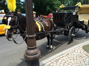Tyler and his carriage at New York City's Central Park
