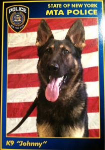 """K-9 Johnny as he appears on his own trading card. Each of the MTA Police Canines have cards that handlers can share with children. On the back of the card Johnny says, """"If you see something, say something."""""""