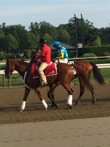 American Pharoah in the Post Parade at Saratoga Race Course