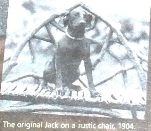 The original Jack the Manchester Terrier sits in a chair at Sagamore Hill, circa 1904